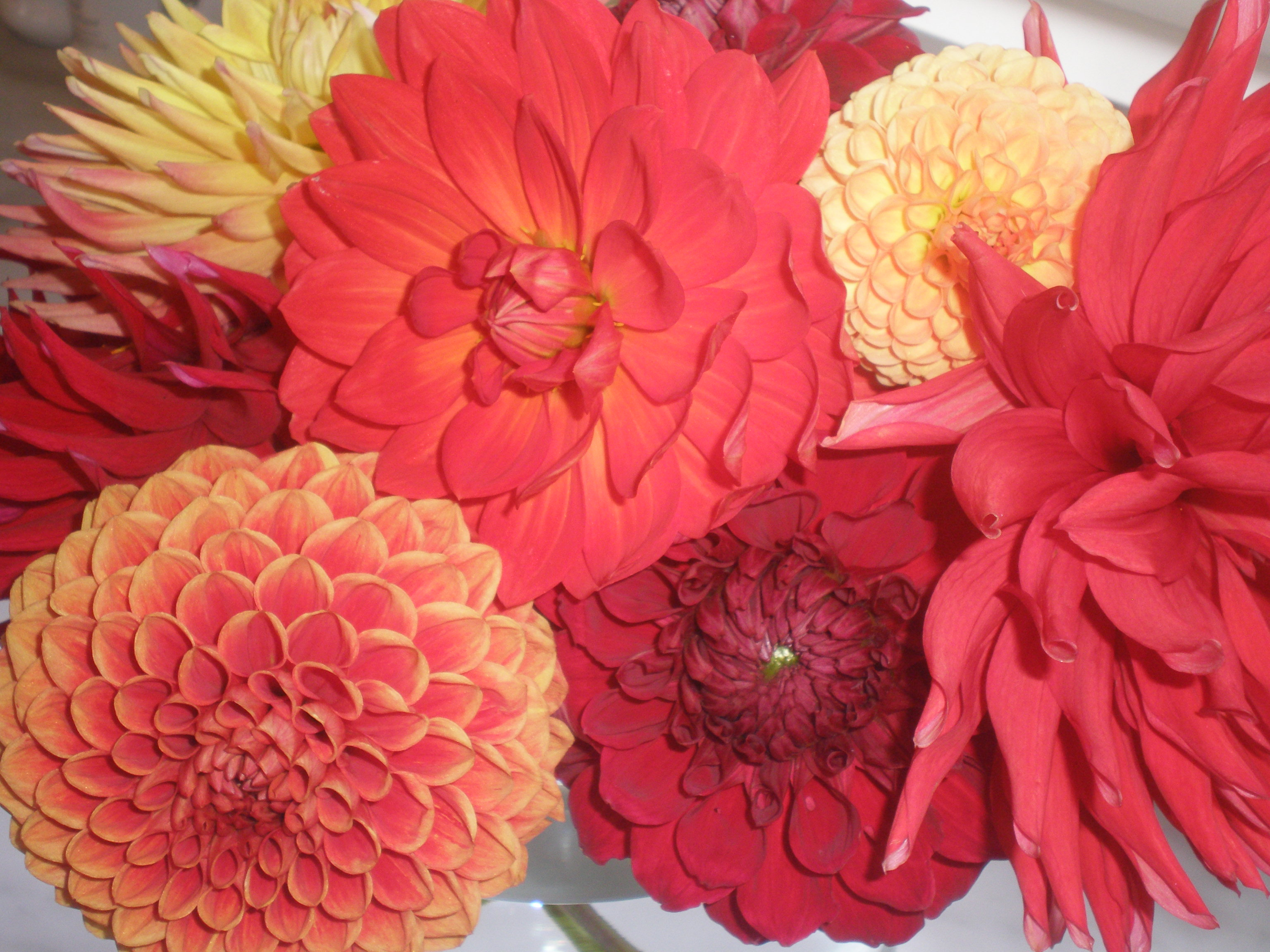 Exceptional Coral Colored Flowers Methods - Totaltravel.US
